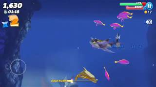 Play with smooth hammerheads (video 54)
