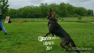 How to select breeding German Shepherds