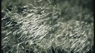 Vlaštověnka -  Vlasta Redl