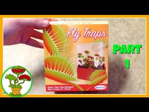 Video Venus Fly Traps: Part 1