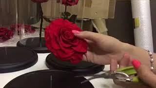 Роза в колбе. Как собрать вечную Розу в колбе.