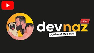 Dogs fighting new dog gets attacked , then bully gets bullied