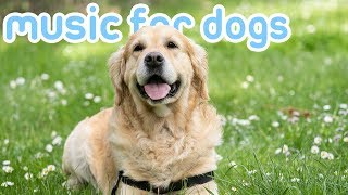 The BEST Relaxing Sleep Music for Dogs with Anxiety! Reduce Stress!