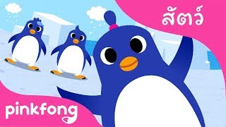 เพนกวินเต้นรำ | เพลงสัตว์ | พิ้งฟอง(Pinkfong) เพลงและนิทาน
