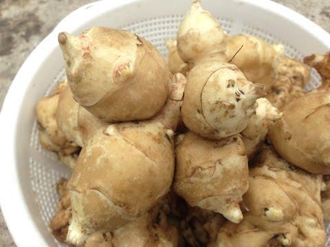Выращивание топинамбура / Земляная груша /  Профилактики сахарного диабата