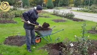 Новое видео об укрытии роз на зиму