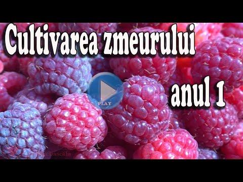 Articole varicose