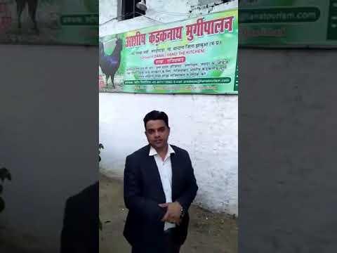Madhya Pradesh Govt planning to sale kadaknath Chicken