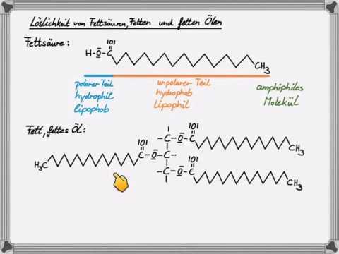 Der Einfluss prolaktina auf die Abmagerung
