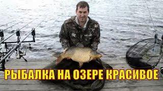 Клев рыбы в мичуринске тамбовской области