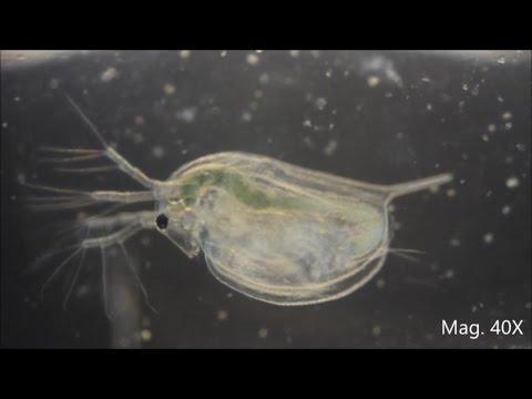 Pagtatanghal ng lahat ng mga bulating parasito