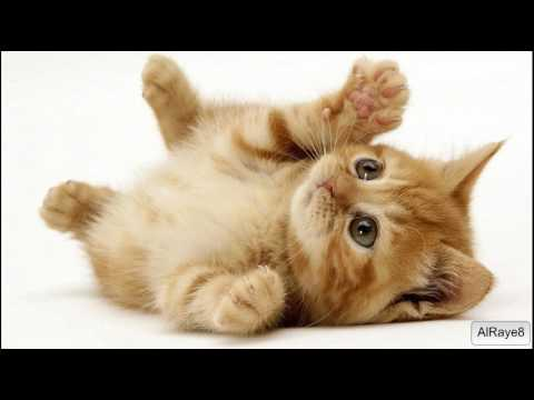 Cat Behavior Problems - Understanding Cat Body Language