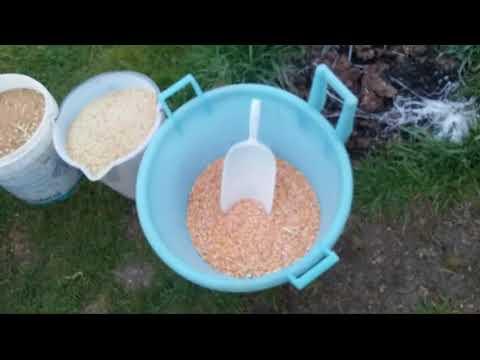 Preparazione mangime galline e polli Biologico 1di2