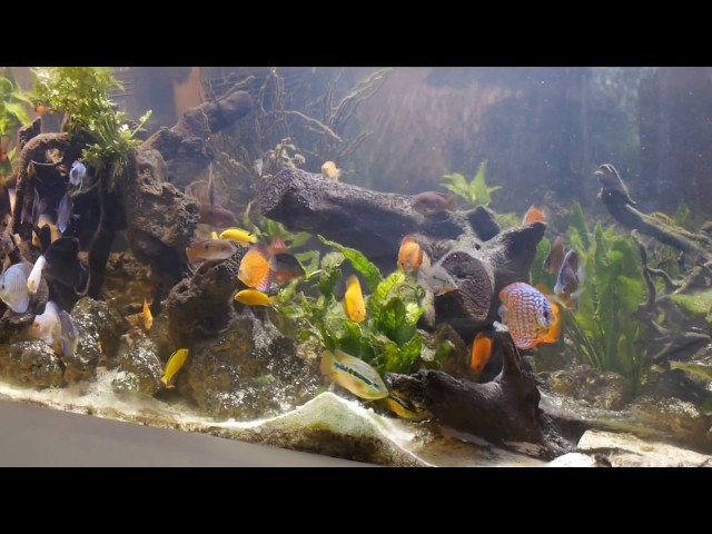 800 gallons tank discus cichlids