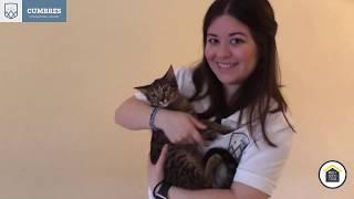 MISS LUCI | PETS
