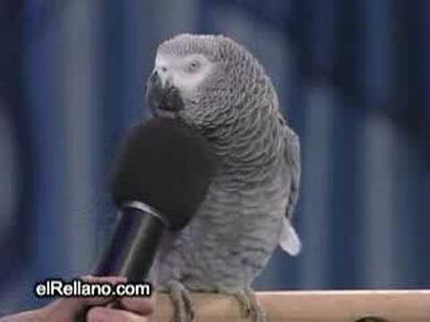 funny talking bird