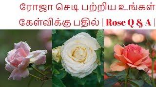 ரோஜா செடி பற்றிய உங்கள் அணைத்து கேள்விக்கு பதில் | Rose Q & A |