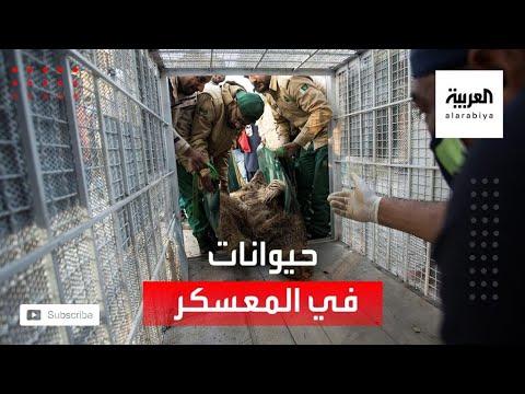 العرب اليوم - شاهد: إغلاق
