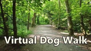 Walk Your Dog TV ~ Virtual Dog Walking ~ In to The Woods