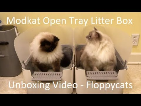 Modkat Open Tray Litter Box Unboxing Arrival Video for Product Review - Floppycats