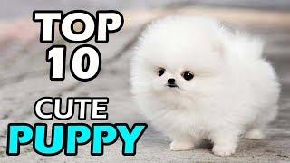 TOP 10 CUTE PUPPY BREEDS