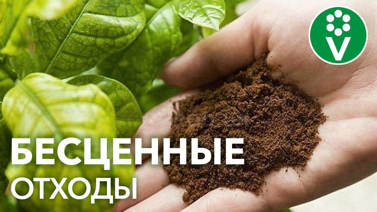 Отходы - в огороды! О пользе спитого чая и кофе