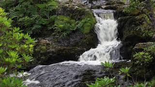 Meditation & Relaxation Nature Sounds 20min. Birdsong & Soothing Water Sounds by Johnnie Lawson