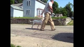 Puppy Training Classes London - Dog Trainer Tips UK