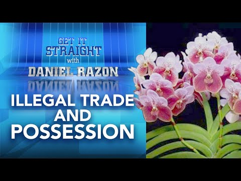 [UNTV]  Penalties for Illegal Trade and Possession of Wild Plants | Get It Straight with Daniel Razon