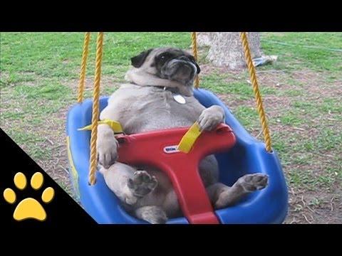 hqdefault - Una divertida recopilacion de videos de carlinos