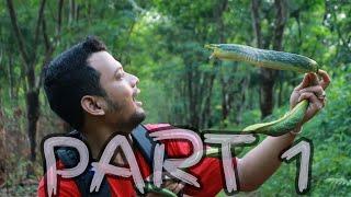 Download Video IDENTIFIKASI ULAR HIJAU GALAK/PART 1 MP3 3GP MP4