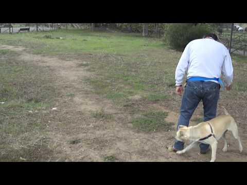 Giocare con il cane educandolo. Sole, 1 anno.
