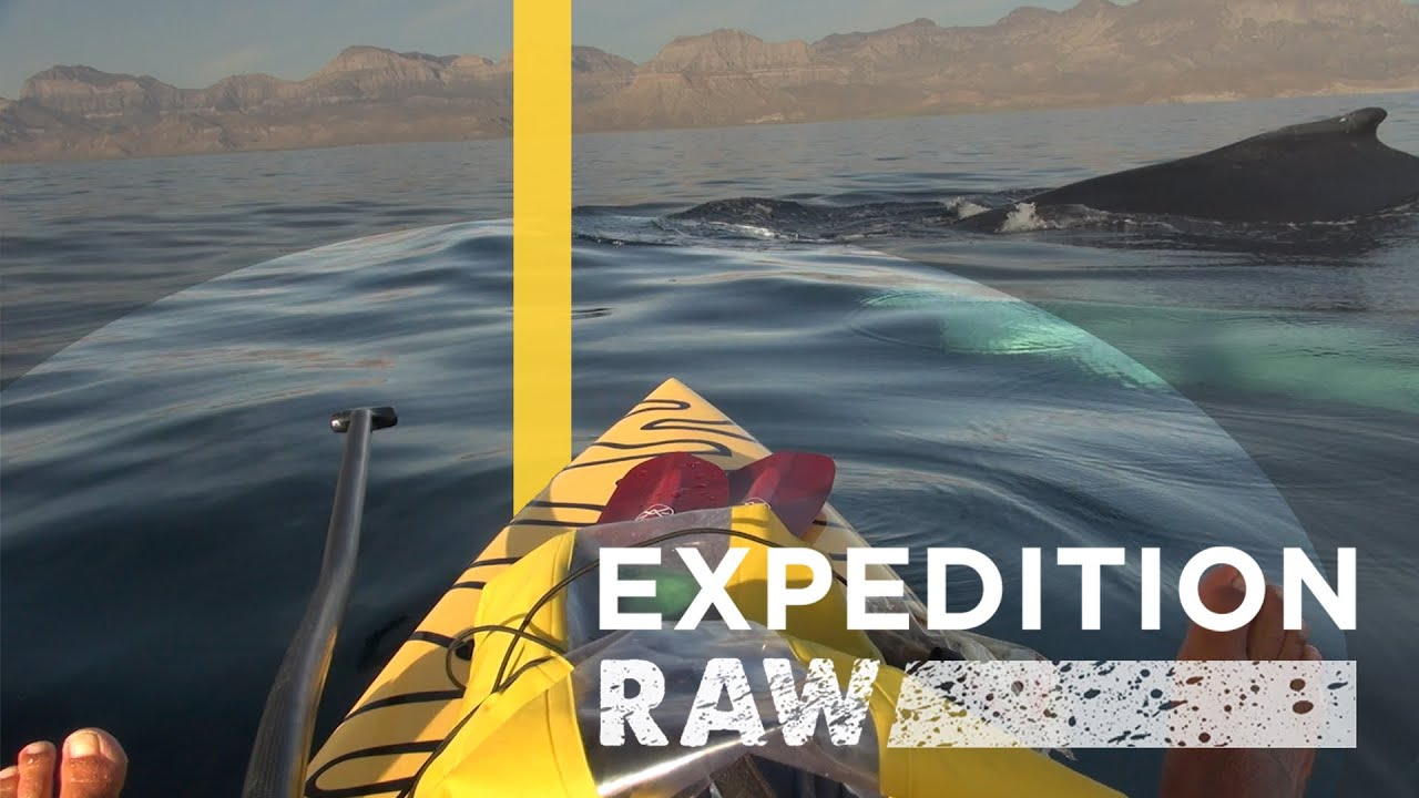 Whales Surprise Baja Paddlers | Expedition Raw thumbnail