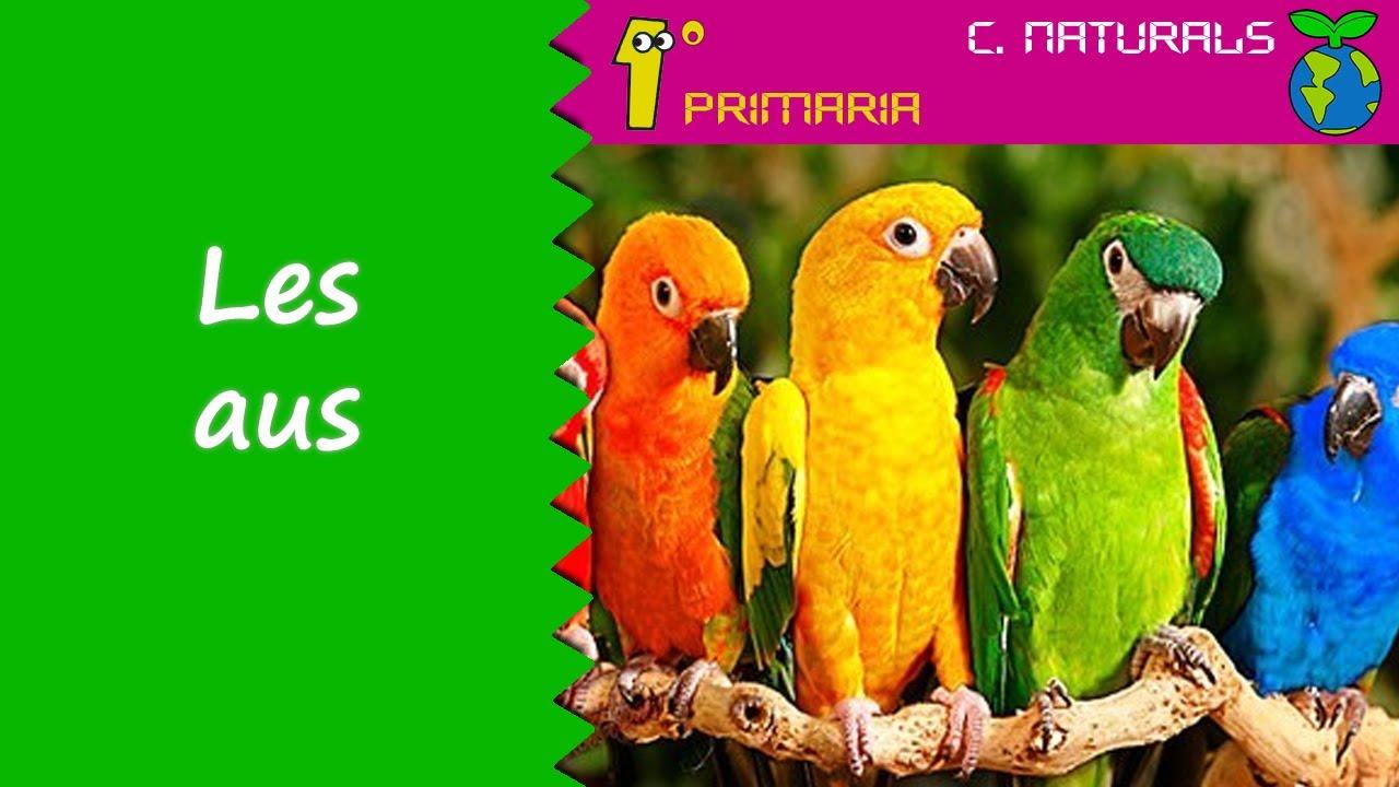 Ciències de la Naturalesa. 1r Primaria. Tema 5: Les aus