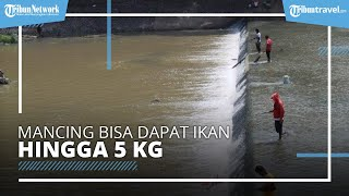 Bendung Simongan Semarang Jadi Spot Favorit Pemancing, Tak Perlu Bayar hingga Hanya Bermodal Lumut
