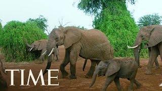 President Trump Reverses Obama-Era Ban Against Hunters Importing Elephant Remains   TIME