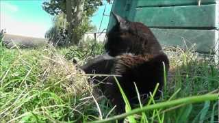 preview picture of video 'Gorse Hill City Farm Mr Moscow'