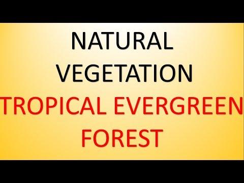 mp4 Natural Vegetation, download Natural Vegetation video klip Natural Vegetation