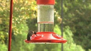 Hanging a Hummingbird Feeder – Family Plot