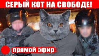 Серый кот на свободе! Но еще 60 суток висит!