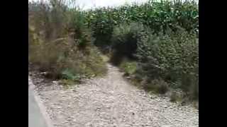 preview picture of video 'Radweg von Gröbenzell nach Lochhausen fehlt 2013 immer noch.'