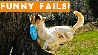 TRY NOT To LAUGH Animals FUNNY PET FAILS Compilation  2018 | Epic Pet Videos & Moments