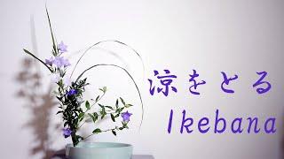 【生け花】桔梗とススキで涼をとる【ikebana】Balloon Flower/Balloon Flower/Bellflower/Japanese Pampas Grass/風鈴草和藤蔓/感覺很酷