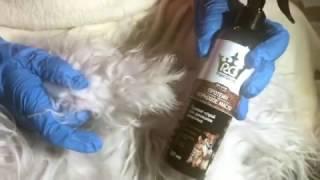 Что делать, если ваша собака превратилась в свалявшийся комок?