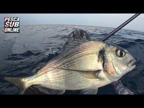 Guardare la pesca a una carpa di video