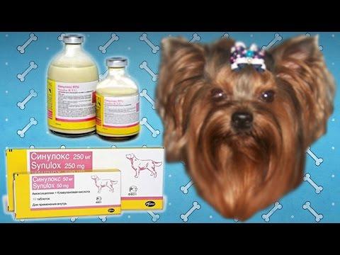 Синулокс для собак   Инструкция по применению.