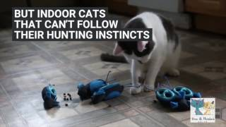 A toy that makes cats 'hunt' and work for their food