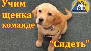 """Урок №2. Как научить собаку команде сидеть / Выдержка по команде """"Сидеть"""""""