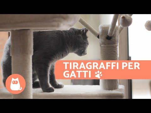 Tiragraffi per gatti - Vantaggi e dove posizionarlo
