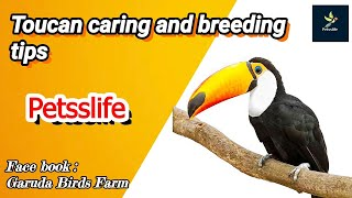Everything about toucan/toco toucans/tamil/toucan caring